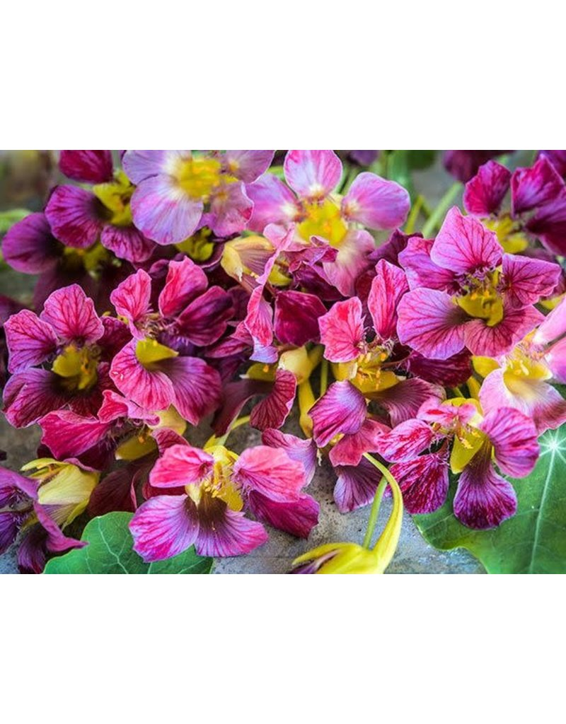 Baker Creek Seeds Nasturtium, Purple Emperor