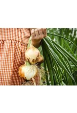 Baker Creek Seeds Onion, Texas Early Grano