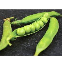 Baker Creek Seeds Pea, Lincoln Garden