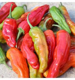 Seed Saver's Exchange Pepper, Shishito