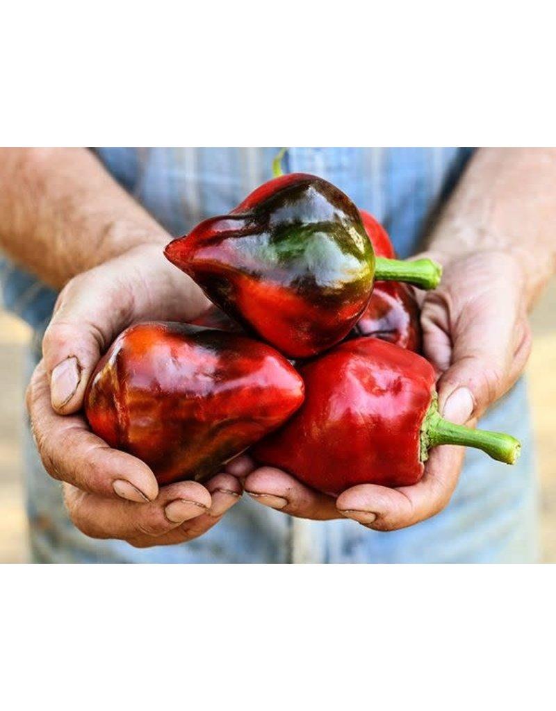 Baker Creek Seeds Pepper, Lesya