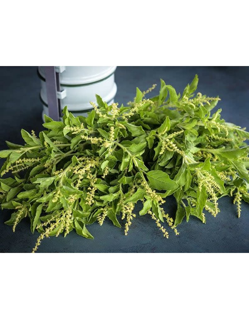 Baker Creek Seeds Herb, Thai Holy Kaprao Basil