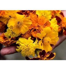 Baker Creek Seeds Marigold, Petite Mix