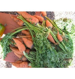 ECHO Seed Bank Carrot, Uberlandia
