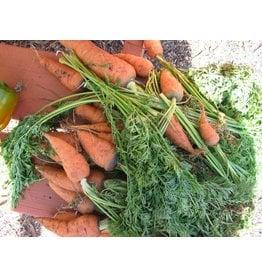 ECHO Seed Bank Carrot, Uberlandia