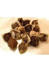 Moringa - Seed Packet