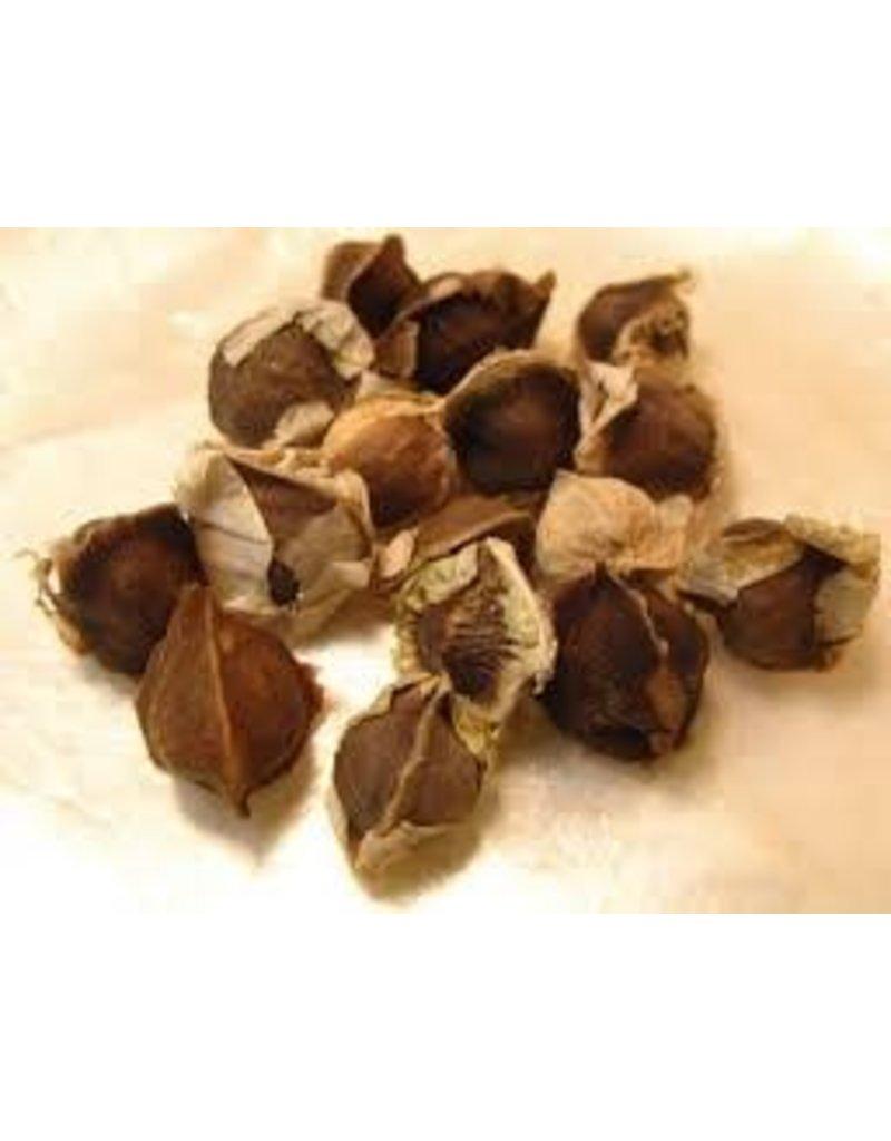 Moringa Seed, Bulk