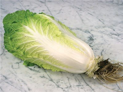 Baker Creek Seeds Chinese Cabbage, Hilton