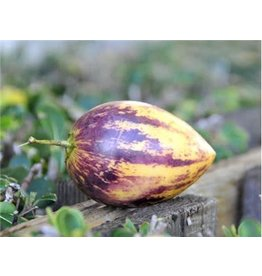 Baker Creek Seeds Garden Berry, Pepino Melon