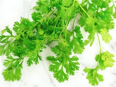 Baker Creek Seeds Herb, Cilantro Slo-Bolt