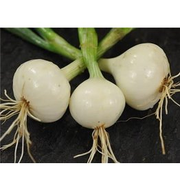 Baker Creek Seeds Onion, White Creole