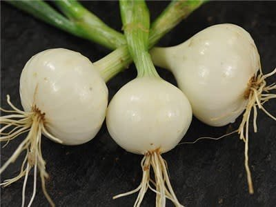 Baker Creek Seeds Onion, White Creole