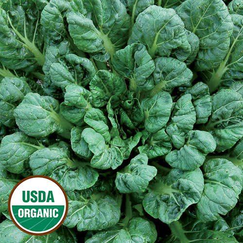 Seed Saver's Exchange Asian Green, Tatsoi