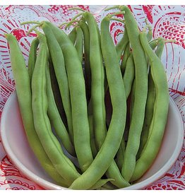 Seed Saver's Exchange Bean, Kentucky Wonder Bush