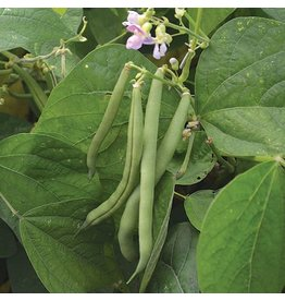 Seed Saver's Exchange Bean, Provider