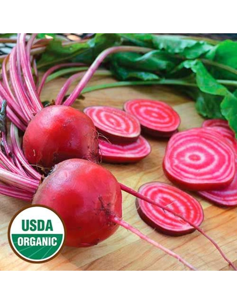 Seed Saver's Exchange Beet, Chioggia