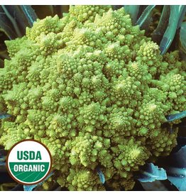 Seed Saver's Exchange Cauliflower, Romanesco