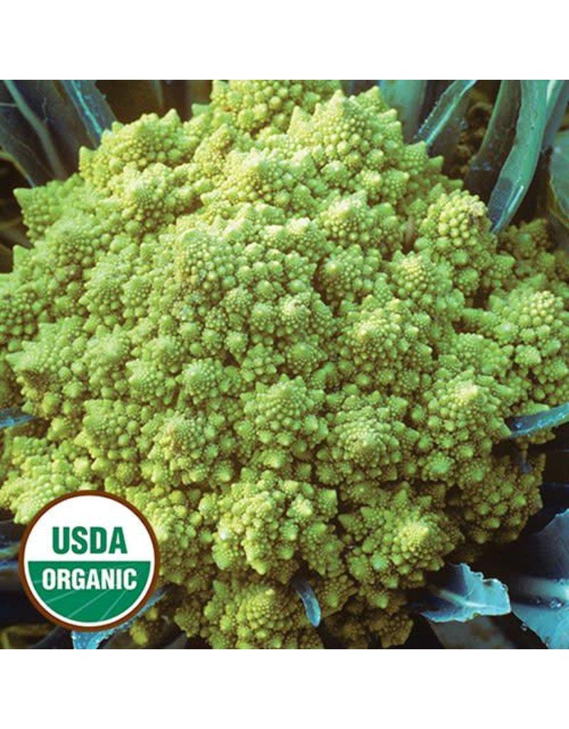 Seed Saver's Exchange Cauliflower, Romanesco