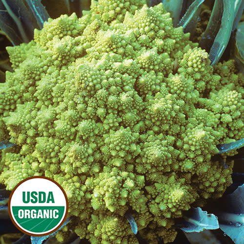 Seed Saver's Exchange Broccoli, Romanesco
