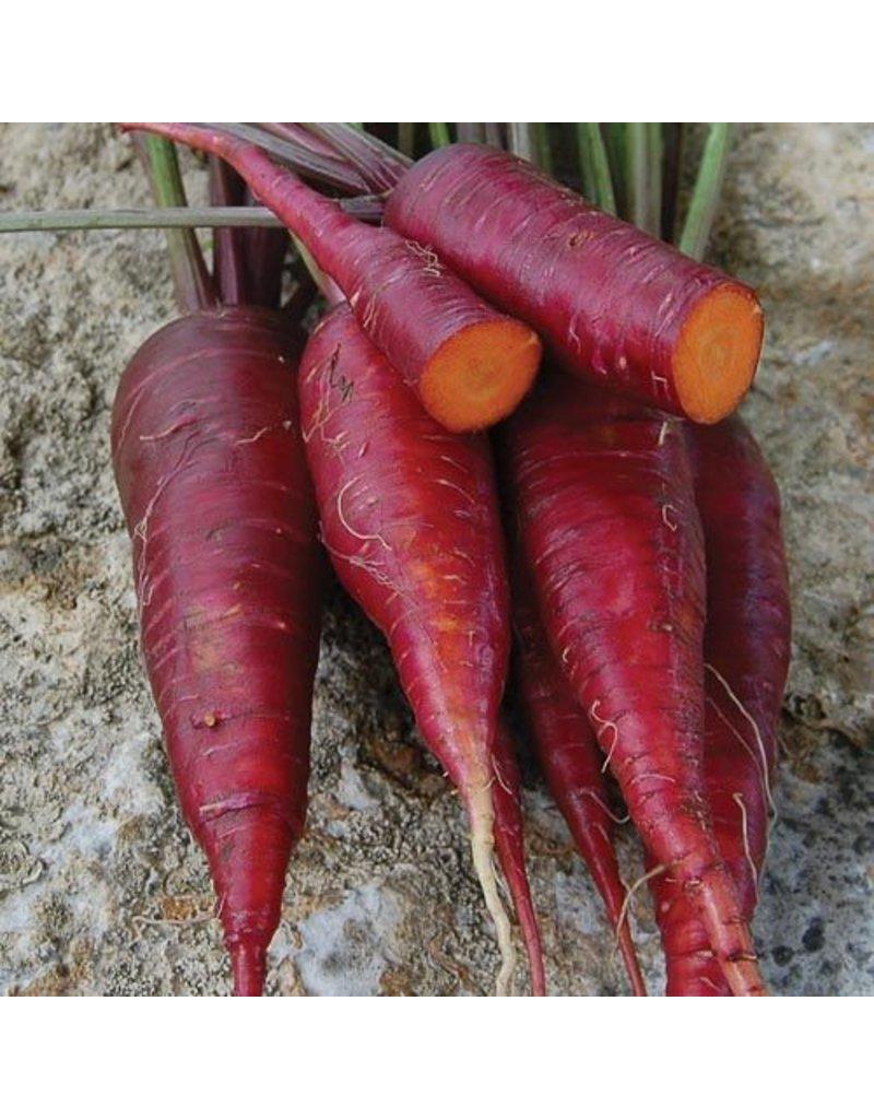 Seed Saver's Exchange Carrot, Dragon