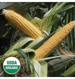 Seed Saver's Exchange Corn, Golden Bantam