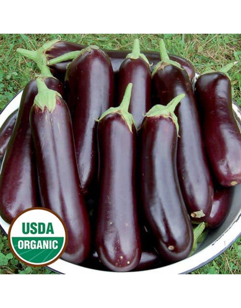 Seed Saver's Exchange Eggplant, Diamond