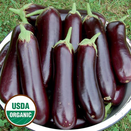 Seed Saver's Exchange Eggplant, Diamond