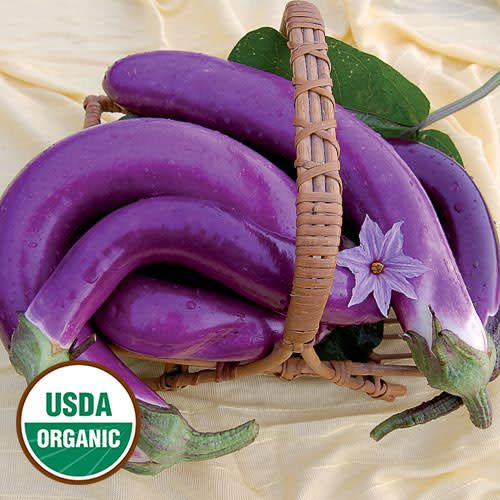 Seed Saver's Exchange Eggplant, Pingtung Long