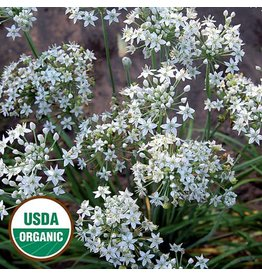 Seed Saver's Exchange Herb, Garlic Chives