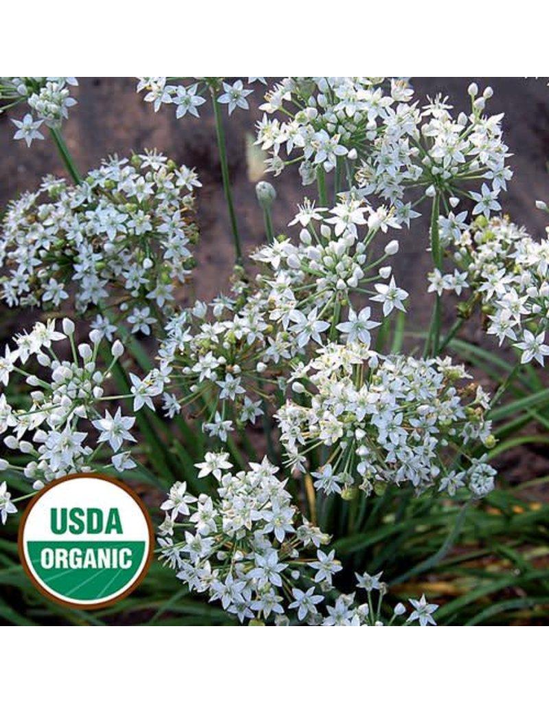 Seed Saver's Exchange Herb, Garlic Chives