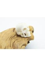 Crâne en os