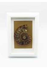 Cadre blanc Ammonite