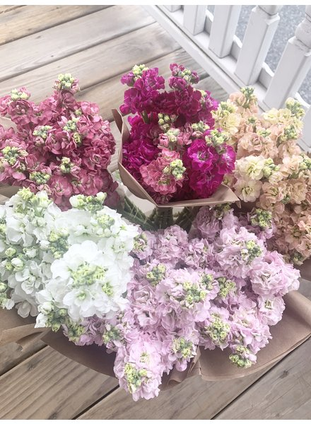 Longbourn Blooms Locally Grown Stock Bunches