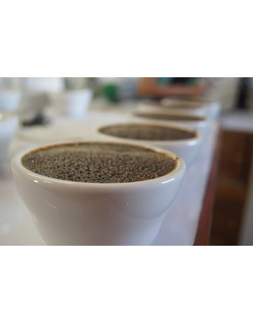 Atelier Barista - Dégustation café