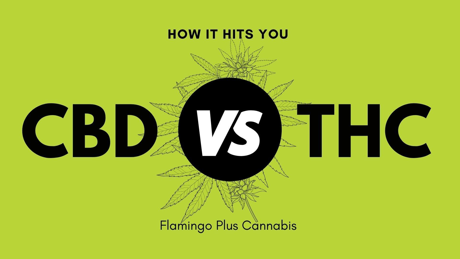 CBD vs THC. How it hits you.