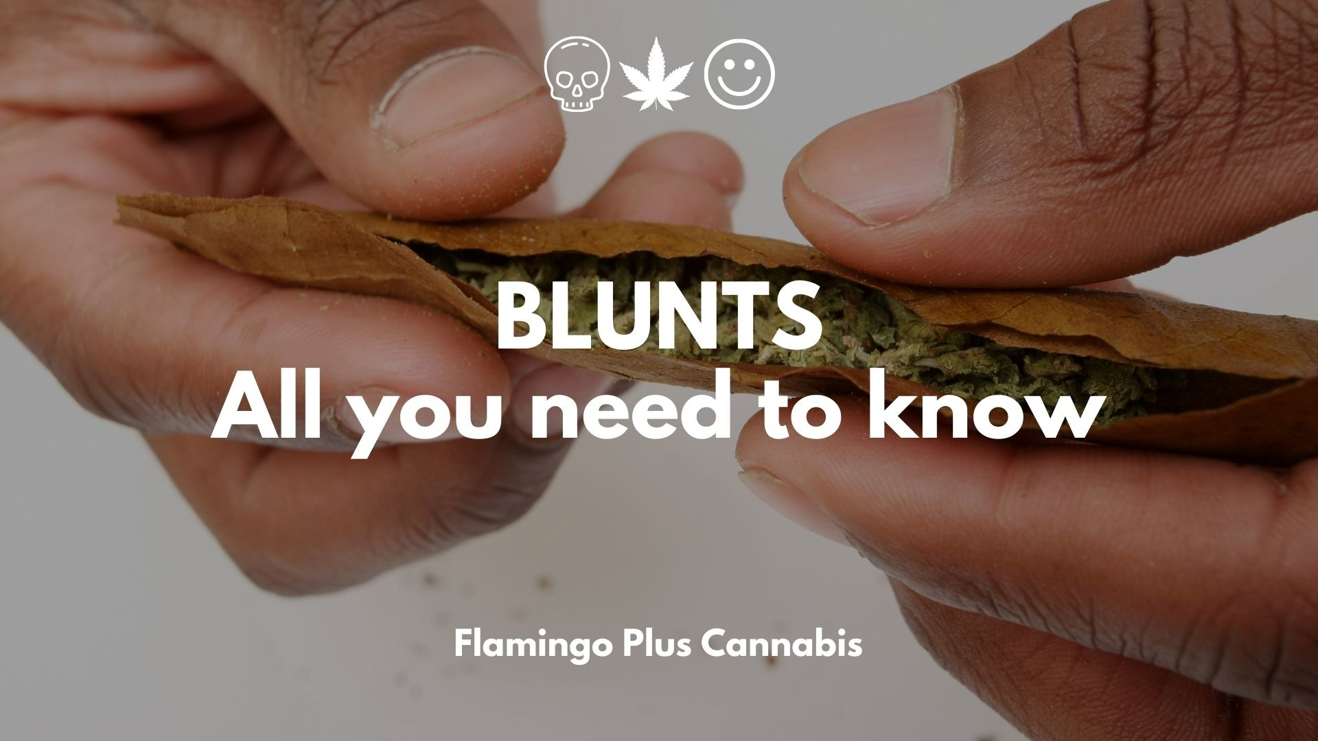 Blunts! All you Need to Know.