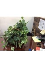 Faux Plant