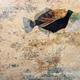 John Baran HUMU HUMU WITH MAP, 9X12 PRINT ON WOOD