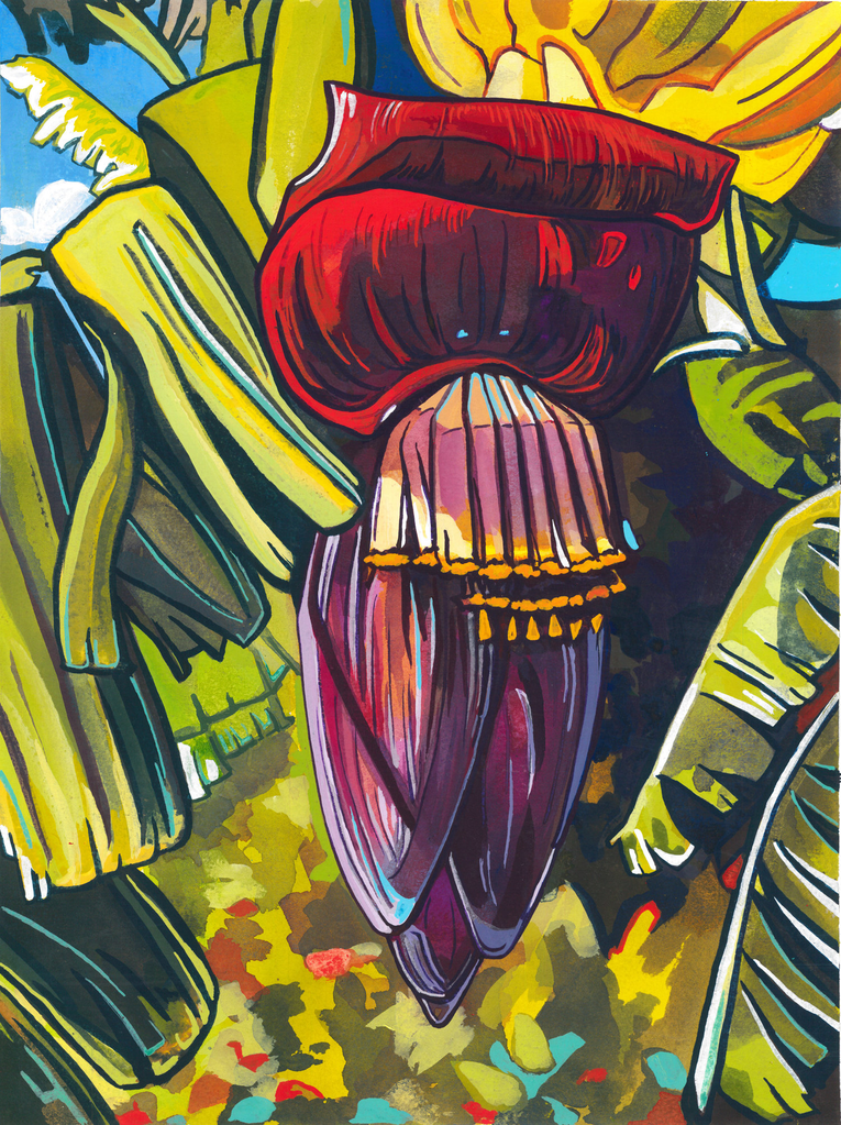 "Miriam Zora Engel CANVAS GICLEE-BANANA FLOWER-16""X20"""