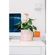 "Sax Home 6"" MED. FABRIC/CANVAS PLANTER - Rainbow Pineapple Jana Lam Plant Sax"