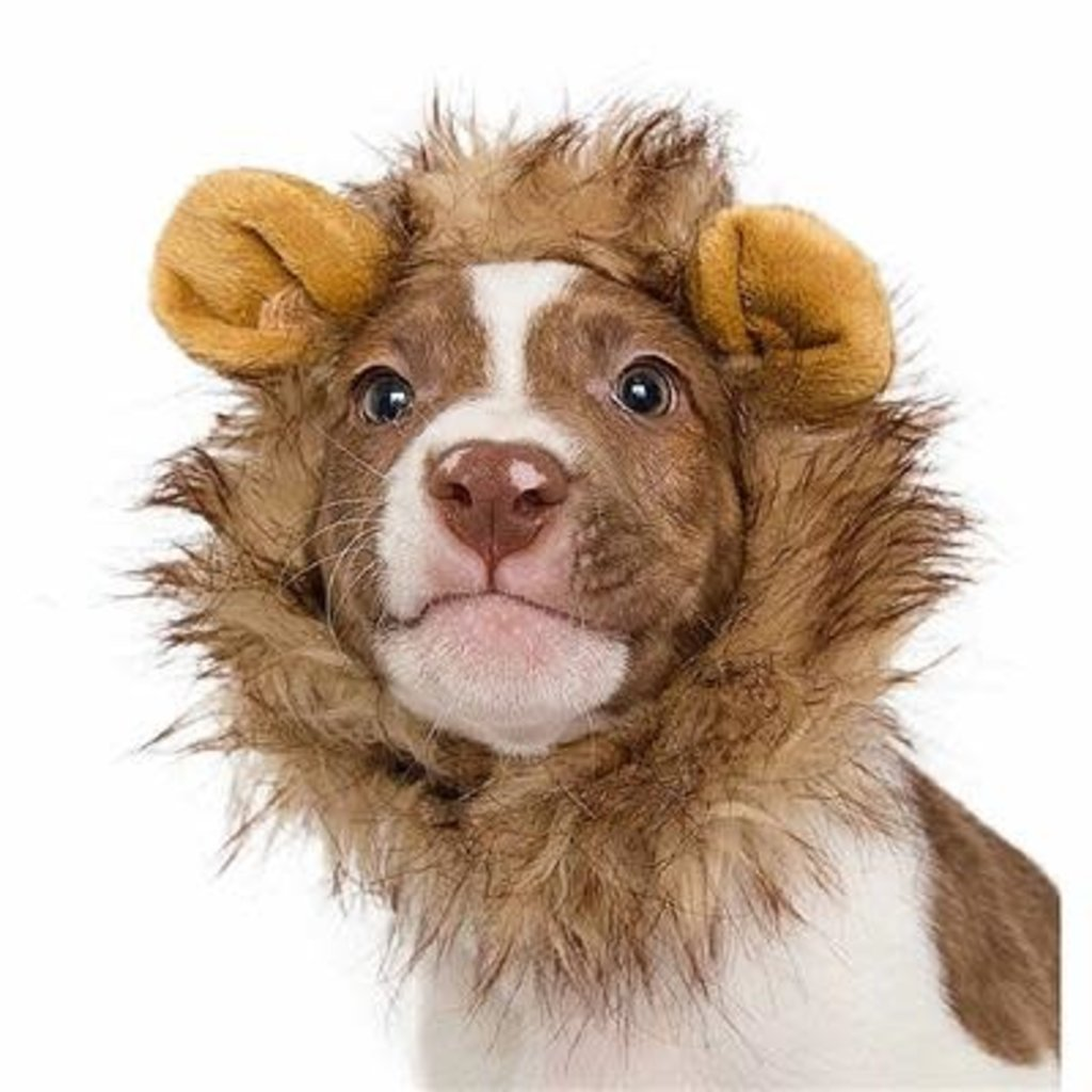 Pet Krewe Small Lion Mane (for cats or dogs)