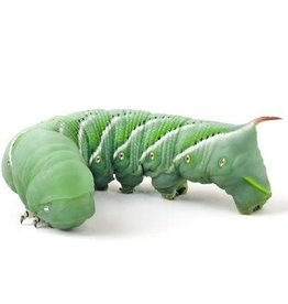 Hornworm Single