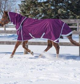 Canadian Horsewear 2020 Canadian Horsewear Diablo  Plum Reflect 300gm