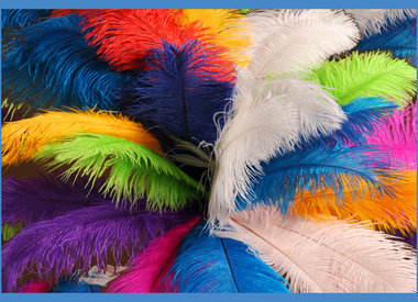 Spads/Drab Ostrich Feathers