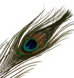 """Peacock Feathers Natural 25-30"""""""