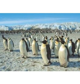 TOMAX TOM50-089 EMPEROR PENGUINS 500 PCS PUZZLE