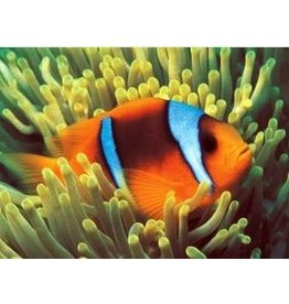 TOMAX TOM50-049 CLOWNFISH 500 PCS PUZZLE GLOW IN THE DARK