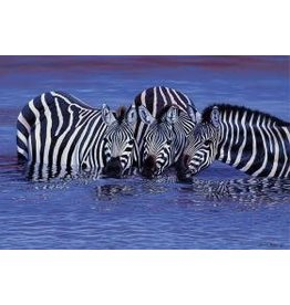TOMAX TOM100-123 ZEBRAS IN WATER 1000 PCS PUZZLE