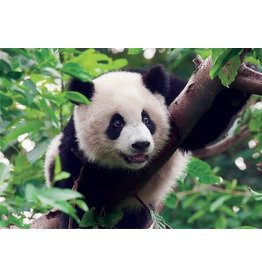 TOMAX TOM30-078 YOUNG GIANT PANDA BEAR 300 PCS PUZZLE
