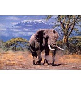 TOMAX TOM100-119 ELEPHANT IN AMBOSELI